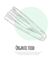 Hand drawn celery over white background vector image
