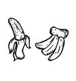 banana doodle vector image