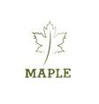 maple leaf design template vector image