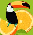 toucan vector image vector image