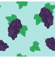 Seamless Pattern with Bunches of Black Grapes on vector image