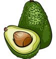 avocado fruit cartoon vector image vector image