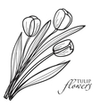 Tulip flowers sketch vector image