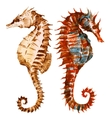 Watercolor seahorses vector image