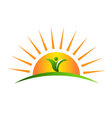 Plant in sunrise logo vector image