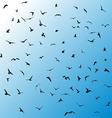 Birds gulls black silhouette on blue background vector image