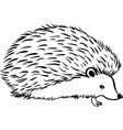 hedgehog stylization icon logo line sketch vector image