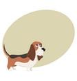 cute purebred basset hound dog character cartoon vector image