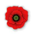 paper art red poppy vector image