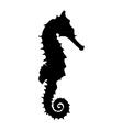 Black seahorse vector image