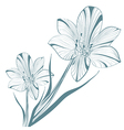Vintage Lily Flower vector image