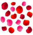 Red Rose Petals vector image