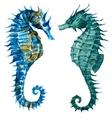 Watercolor seahorses vector image