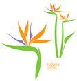 Bird of paradise Tropical flower vector image