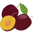 Ripe whole and half plums fruit with leaves vector image