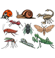 set of insects vector image vector image