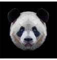 panda head polygon portrait isolated vector image
