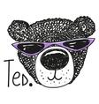 Cool Bear vector image