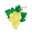 White grape with leaf vector image