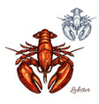 lobster isolated sketch for seafood design vector image