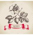 Rose hips Hand drawn sketch berry vintage vector image