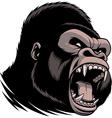 The fierce gorilla head vector image