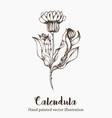 Calendula Plant vector image
