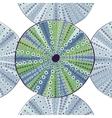 Sea urchin colorful vector image