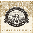 Vintage grapes harvest label vector image