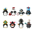 Penguin animal character vector image