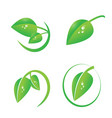 green leaf with dew drops icon set vector image