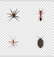 realistic arachnid dor emmet and other vector image