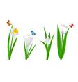 White spring flowers vector image