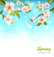 Beautiful Cherry Blossom vector image