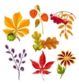 Set of stylized autumn leaves and plants Objects vector image vector image