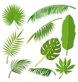 Tropical palm tree jungle leaves set vector image