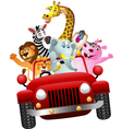 African animals in red car vector image