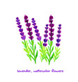 watercolor lavender collection vector image