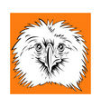 Philippine Eagle head vector image