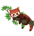 Red Panda vector image