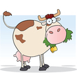 Cow Cartoon Character Chewing On A Grass vector image