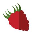 blackberry fruit icon vector image