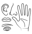 Sensory organs hand nose ear mouth and eye vector image