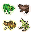 Four Different Type of Frogs vector image