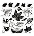 Set of different leaves vector image
