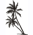 palm vector image vector image