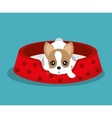 boston terrier lying in red bed vector image