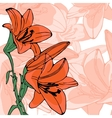 Elegant of lilly flowers vector image