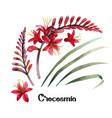 Watercolor crocosmia collection vector image