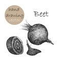 Hand Drawn beet Monochrome sketch vector image